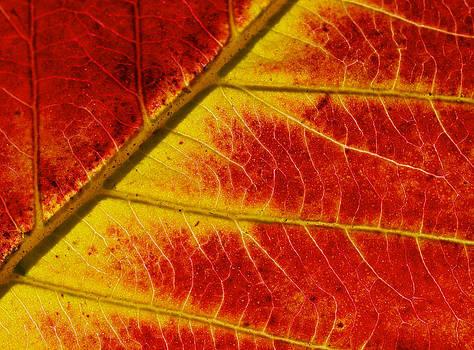 Colors Of Autumn by Meir Ezrachi