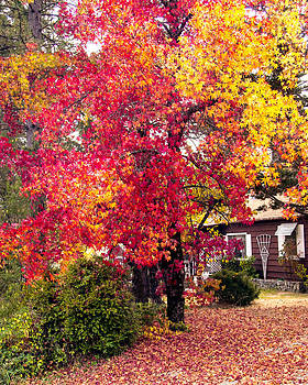 William Havle - Colors Of Fall