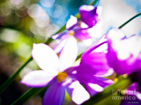 Colors of Spring by Chris Heitstuman