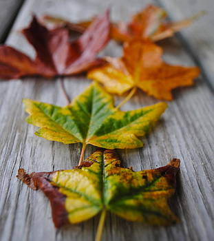Colors of the fall by Amanda Letcavage