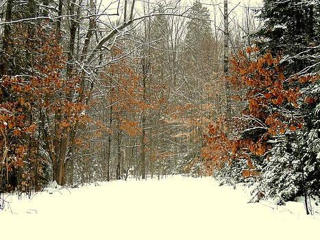 Amalia Jonas - Colors of the Winter