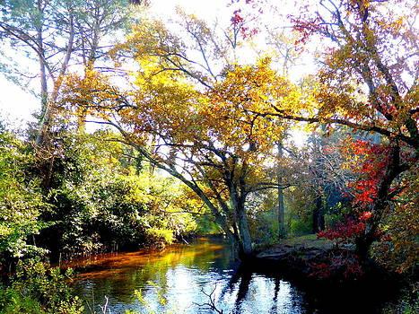 Bishopston Fine Art - Colours of Autumn