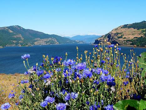 Columbia River View. by Lynette McNees