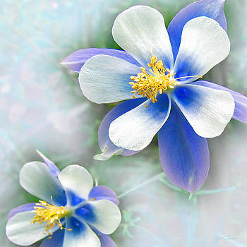 Julie Magers Soulen - Columbine in Blue