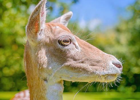 Come closer deer by Yvon van der Wijk