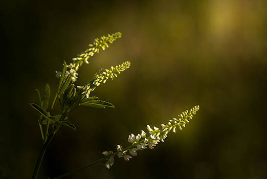 Come With Me by Paul Barson