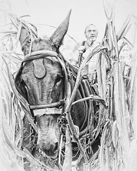 Coming Through the Corn by Ron  McGinnis