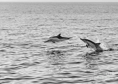 Jamie Pham - Common Dolphins leaping.
