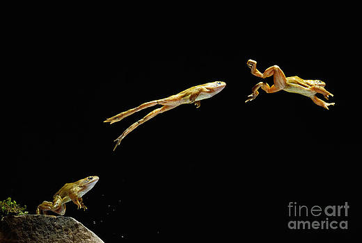 Stephen Dalton - Common Frog Leaping
