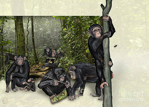 Robust Chimpanzees Pan troglodytes - Zoo interpretive panel - Schimpansen Schautafel  by Urft Valley Art