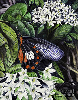 Common Rose Swallowtail Butterfly by Gail Darnell