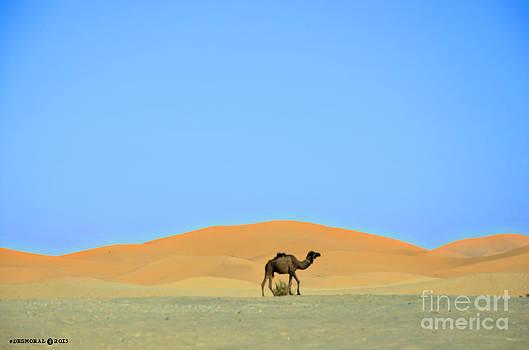 Como Un Camello En El Desierto by Julia Moral