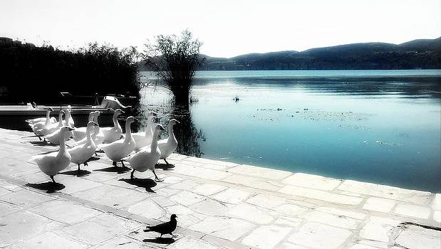 Compare by Ioanna Papanikolaou