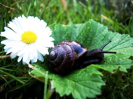 Composition with Snail by Janina Marachkovska