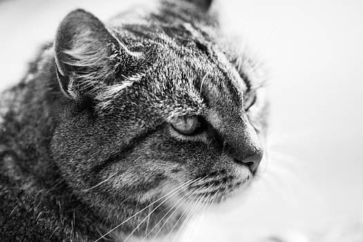 Hakon Soreide - Concentrating Cat