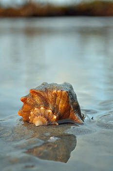 Conch Shell and Reflection on Jekyll Island's Beach by Bruce Gourley