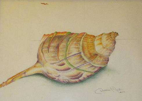 Conch Shell by Debbie Nester