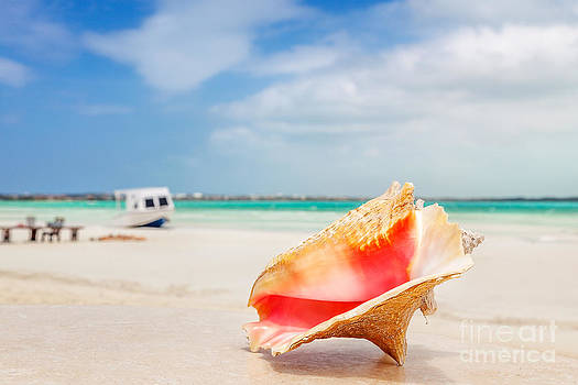 Jo Ann Snover - Conch shell on table on the beach