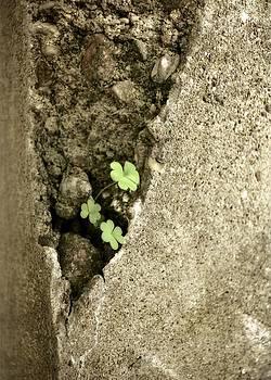 Michelle Calkins - Concrete Sign of Life