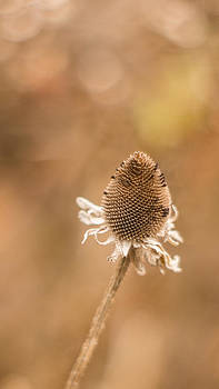 Cone Bokeh by Dawn Hagar