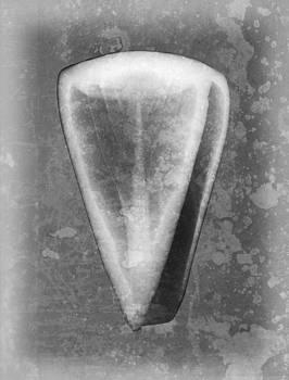 Roy Livingston - Cone Sea Shell X-ray Art
