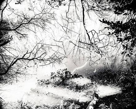 Confusion of the senses by Hayato Matsumoto