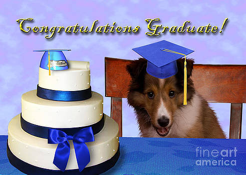 Jeanette K - Congratulations Graduate Sheltie Puppy