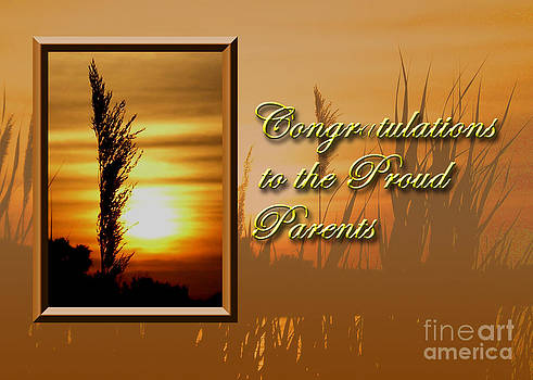 Jeanette K - Congratulations to the Proud Parents Sunset