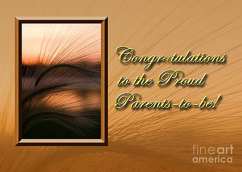 Jeanette K - Congratulations to the Proud Parents to be Grass Sunset