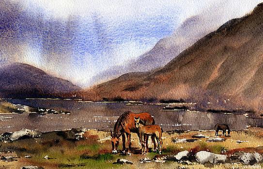 Val Byrne - Connemara Ponies Galway