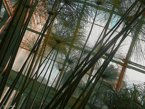 Conservatorybwindow by David Klaboe