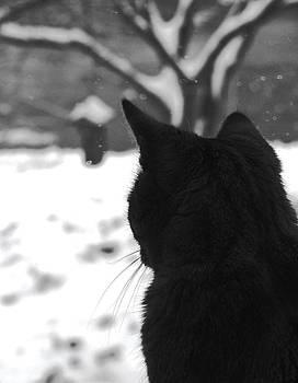Angela Davies - Contemplating Winter
