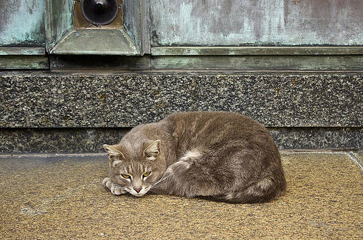 Venetia Featherstone-Witty - Cat Contentment