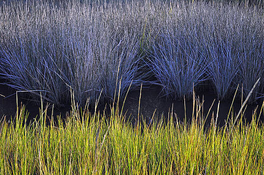 Contrasting Marsh Grasses on Jekyll Island by Bruce Gourley