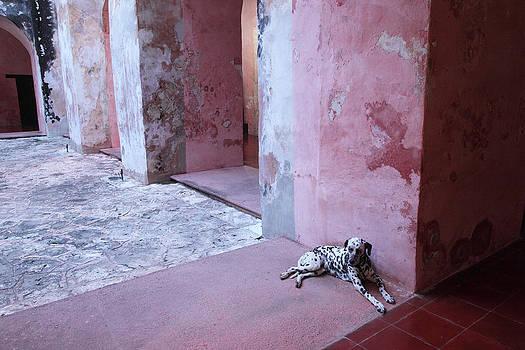Susan Rovira - Convent Dog