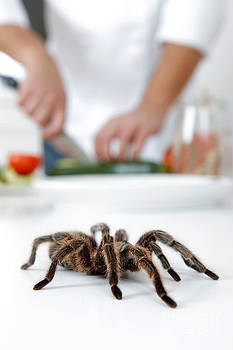 Emilio Scoti - Cooking Insects And Spiders