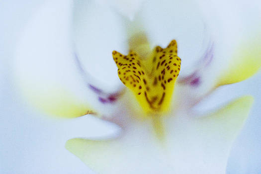 Blue Orchid by Bradley R Youngberg