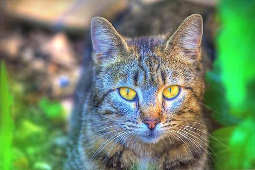 Cool Cat by Martin Joyful
