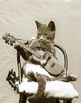 California Views Mr Pat Hathaway Archives - Cool Cat Playing a Guitar circa 1900 Historical Photo by Photo  Henry King Nourse