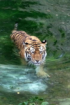 Cooling Off by Loretta Orr