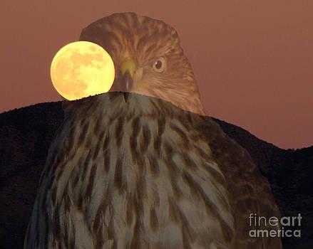 Cooper's Hawk Full Moon by Rick Wheeler