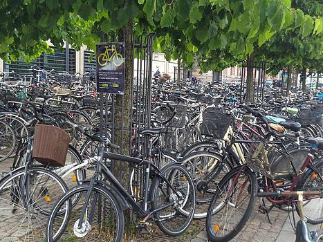Copenhagen Bicycles by David Nichols