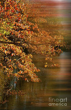 Copper Tone Autumn Leaves by Heinz G Mielke