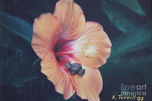 Coqui  by The Art of Alice Terrill