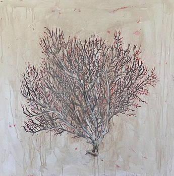 Coral Bleach by Amanda Norman