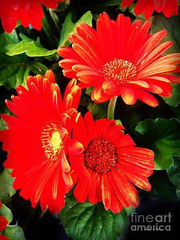 Nancy Stein - Coral Blooms
