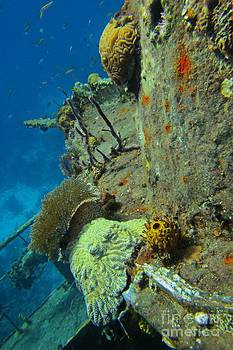 JohN Malone Halifax Photographer - Coral Growth on a Ship Wreck