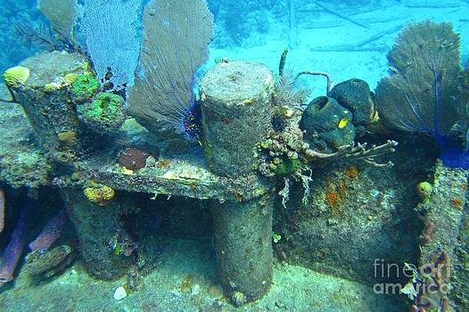 John Malone - Coral Growth on a Ship Wreck