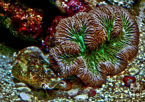 Coral Reef by Fred L Gardner