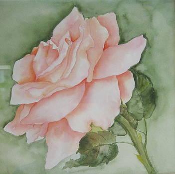 Coral Rose by Martha Efurd